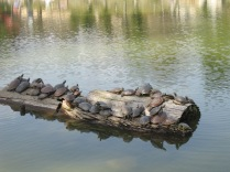 Holy turtles, Batman! (near Nara Park)