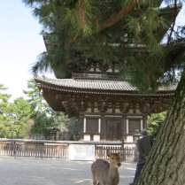 Five Storied Pagoda and one of the multitude of deer