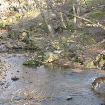 A stream - and deer - near the temple with the Great Buddha