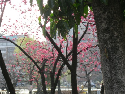 More blossoms in Ueno