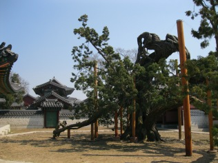 Incredible old tree as we left the Secret Garden to return to the front of Cheangdeokgung