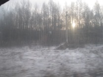 More birches...even some sun!