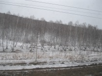 Good thing I love birches...