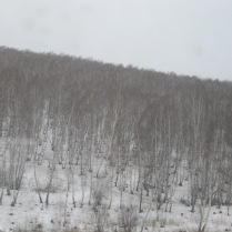 And more birches