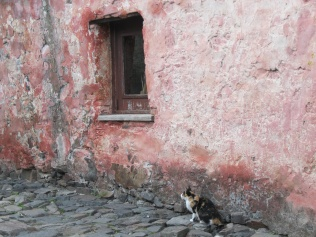 Kitty in Colonia