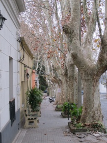 Tree-lined street, Colonia