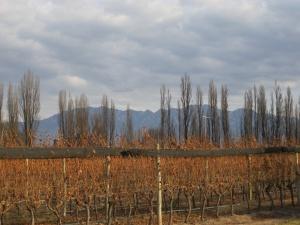 Hills and vines at Dominio del Plata