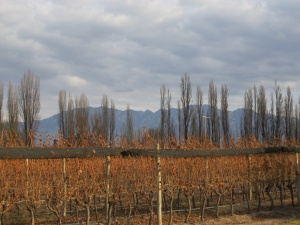 Hills and vines at Dominio del Plata