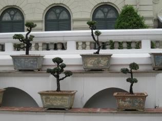 Grand Palace bonsai