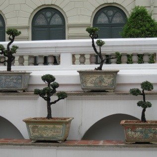 Grand Palace bonsai