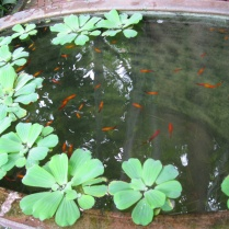 Fish in Jim Thompson's garden