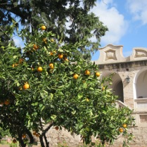 Orange tree in Estancia Alta Gracia