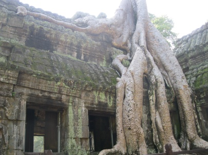 Another magnificent Ta Prohm tree
