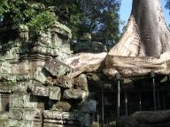Snake-like tree roots
