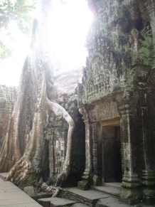 Another Ta Prohm tree